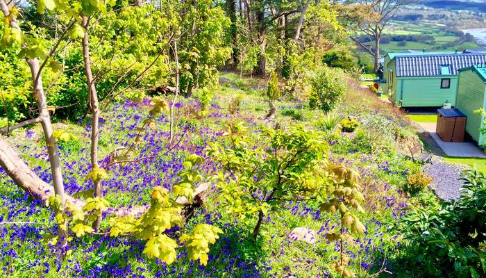 Gorse Hill's bluebell woods look so beautiful....!!!!!